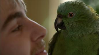 Meet Basil, the Yellow-Naped Amazon
