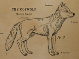 Nature | How the Coywolf is a Coyote/Wolf Hybrid
