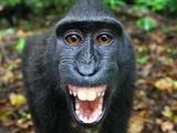Nature | The Funkiest Monkeys
