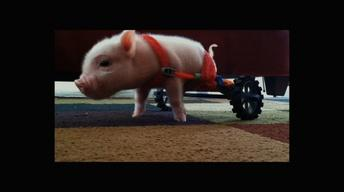 S31 Ep8: Meet Chris P. Bacon, Pig in a Wheelchair