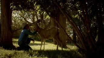 Mule Deer Family Rituals