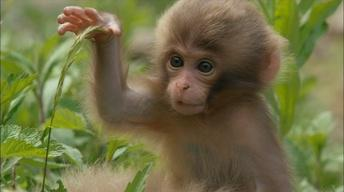 Monkey Babies Start to Explore