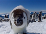 Nature | Penguins: Spy in the Huddle - Part 3