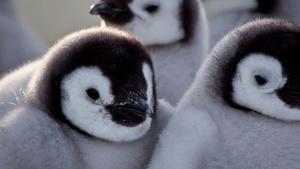 Penguins: Spy in the Huddle | Episode 2 | First Steps
