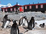 Nature | Penguin Post Office