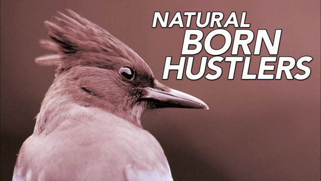 Natural Born Hustlers | Episode 1 |  Preview