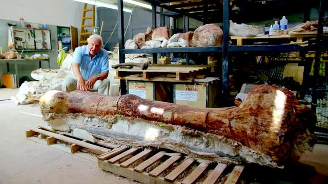 Did This Thighbone Belong to the World's Largest Dinosaur?
