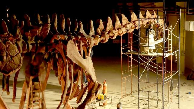 Giant Dinosaur Skeleton Assembled in 60 Seconds!
