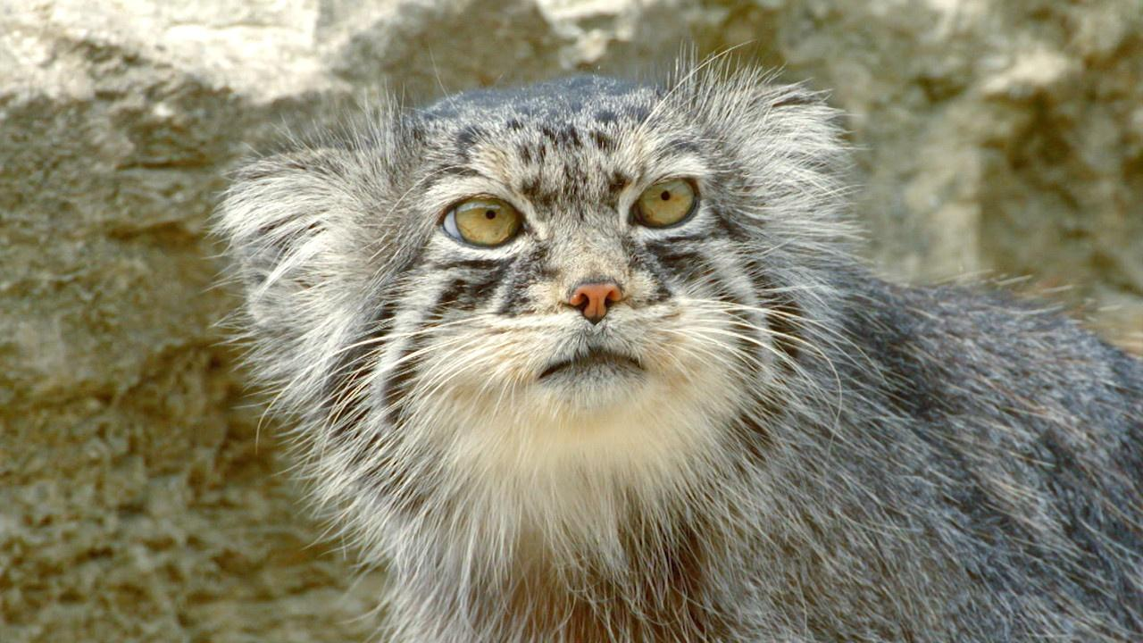 Grumpy-Faced Cat is a Mountain Survivor