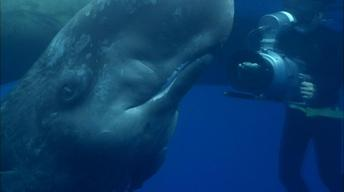 Visit from an Infant Sperm Whale