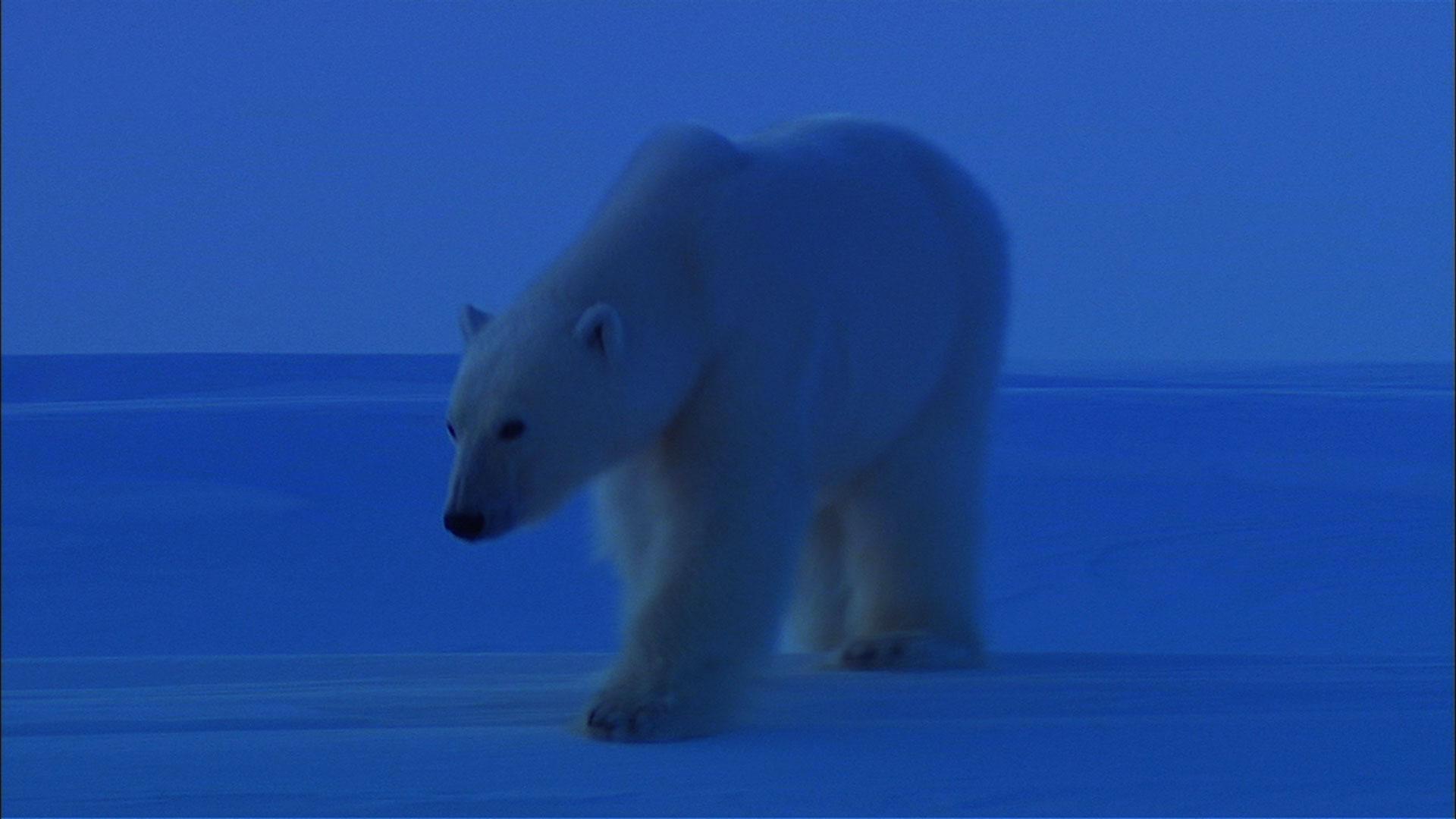 S29 Ep15: Bears of the Last Frontier: Arctic Wanderers