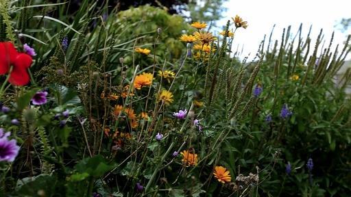 What Plants Talk About Video Thumbnail