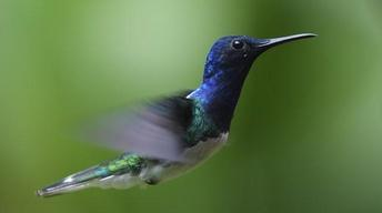 Hummingbirds: Magic in the Air - Preview