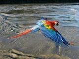 Nature | Earthflight: South America - Preview