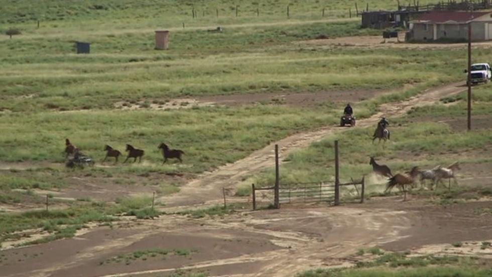 New Mexicans weigh slaughter of overpopulated wild horses image