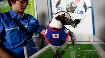 Animals predict World Cup outcomes across the globe