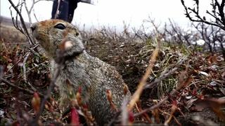 How soil and squirrels offer cues on Alaska climate change