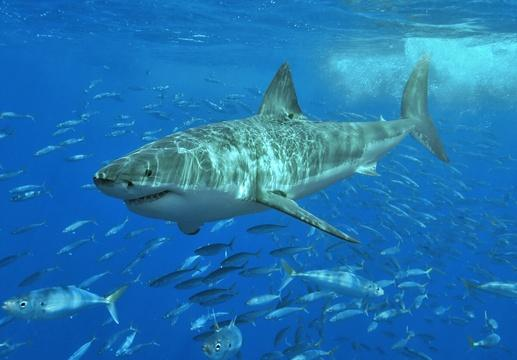 Armor-like shark skin may offer defense from superbugs
