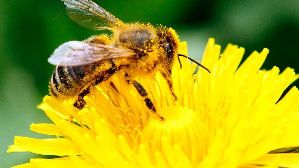 Are pesticides to blame for the massive bee die-off? image