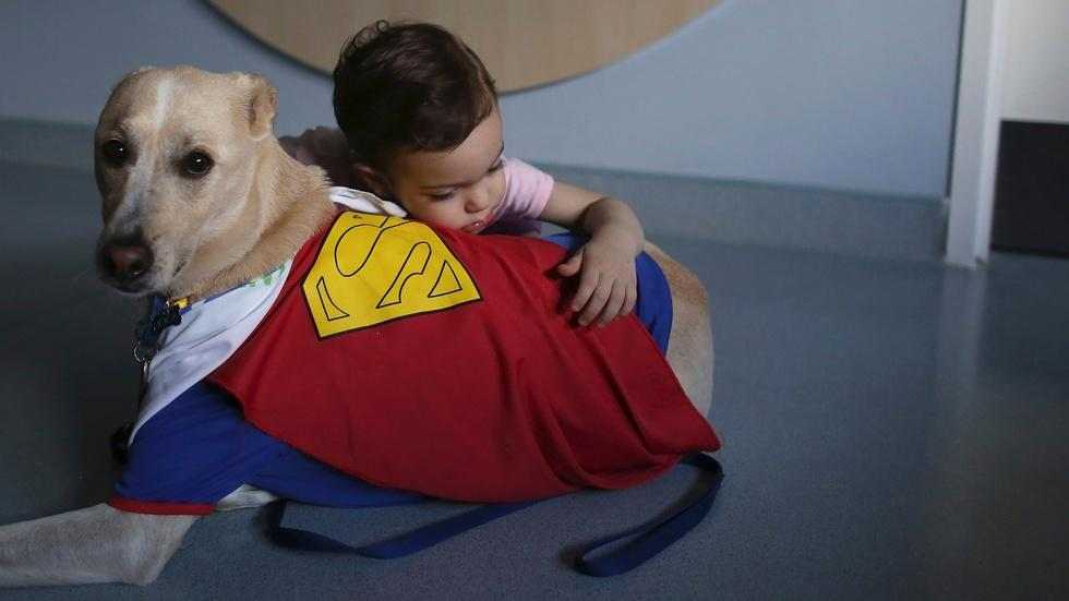 'Courtroom dogs' help child crime victims tell their stories image