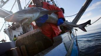 Can the seafood industry get Americans to eat local fish?