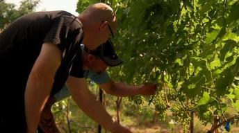 Training Students for Jobs in Washington's Wine Industry