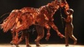 Conversation: 'War Horse'
