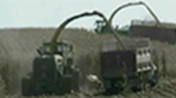 Iowa Farmers Squeezed by Belt Tightening