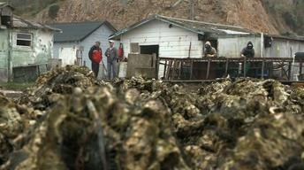 Strange Bedfellows Fight to Keep Oyster Farm in Operation