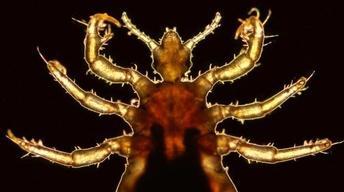 S5 Ep5: Lice and Human Evolution