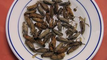 Five Reasons to Eat Insects