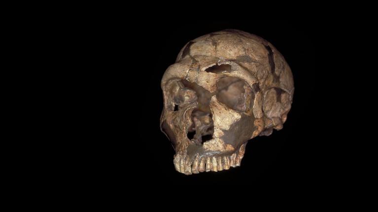 NOVA scienceNOW: What Makes Us Human?