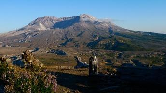 Mt. St. Helens: Back From the Dead