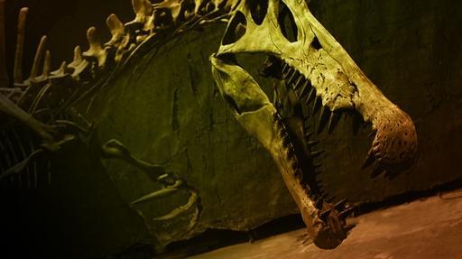 Bigger Than T.rex Video Thumbnail