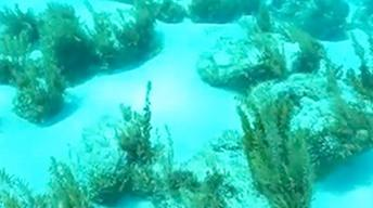 Exuma Cays 2