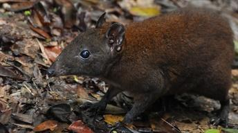 Australia: Strange Creatures Preview