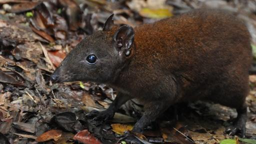 Australia's First 4 Billion Years: Strange Creatures Video Thumbnail