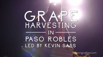 S1 Ep10: Grape Harvesting in Paso Robles
