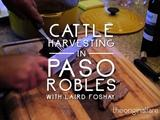 Original Fare | Cattle Harvest in Paso Robles