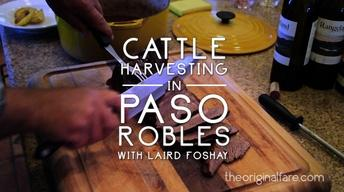 Cattle Harvest in Paso Robles