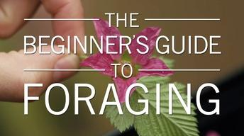 The Beginner's Guide to Foraging