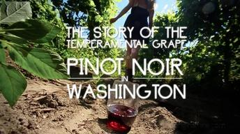 Pinot Noir in Washington