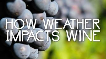 How Weather Impacts Wine