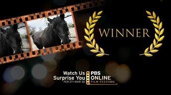 2012 Festival Winner | Horse You See