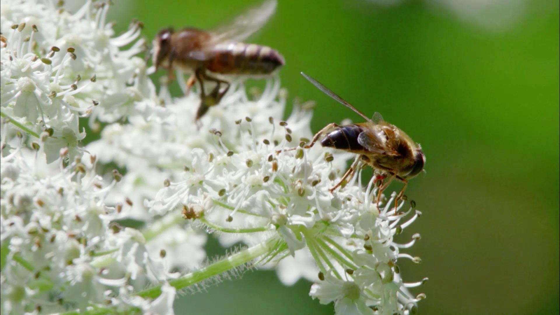 The Queen's Bees