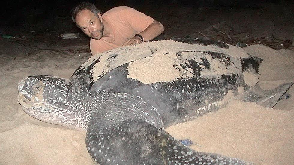 Trinidad's Turtle Giants image