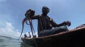 Octopus Fishing in Pemba
