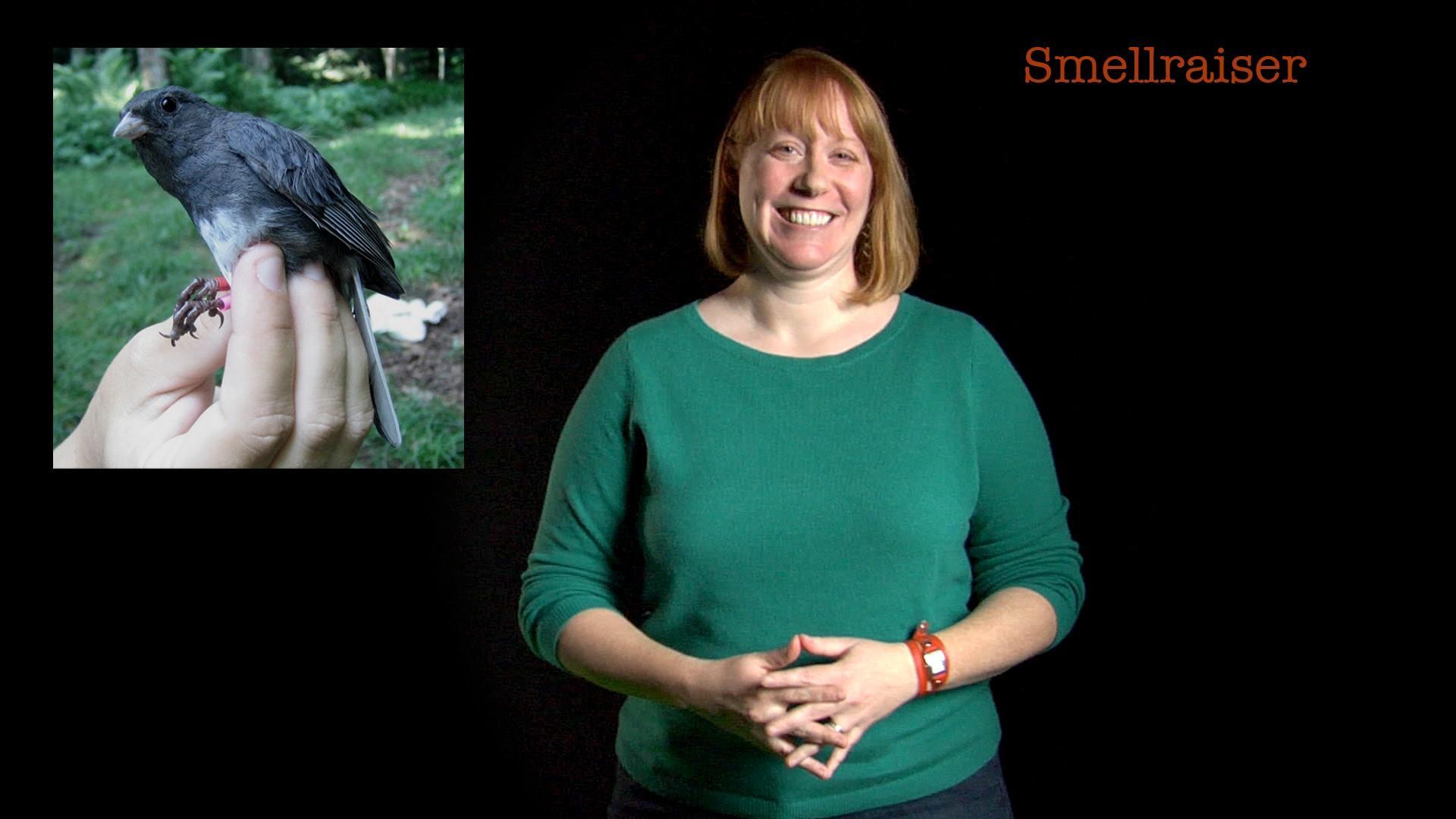 Danielle Whittaker: Smellraiser image