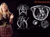 Secret Life of Scientists | Caryn Babaian: 30 Second Science