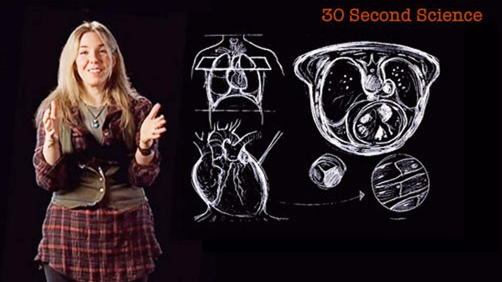 S2010 Ep69: Caryn Babaian: 30 Second Science image